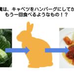 キャベツからハンバーグ/ウサギの栄養学(2)