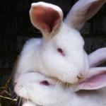 ウサギのマーキング