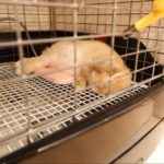 リラックスするうさぎ/動物行動学者監修 細切れがウサギ流?睡眠のひみつ